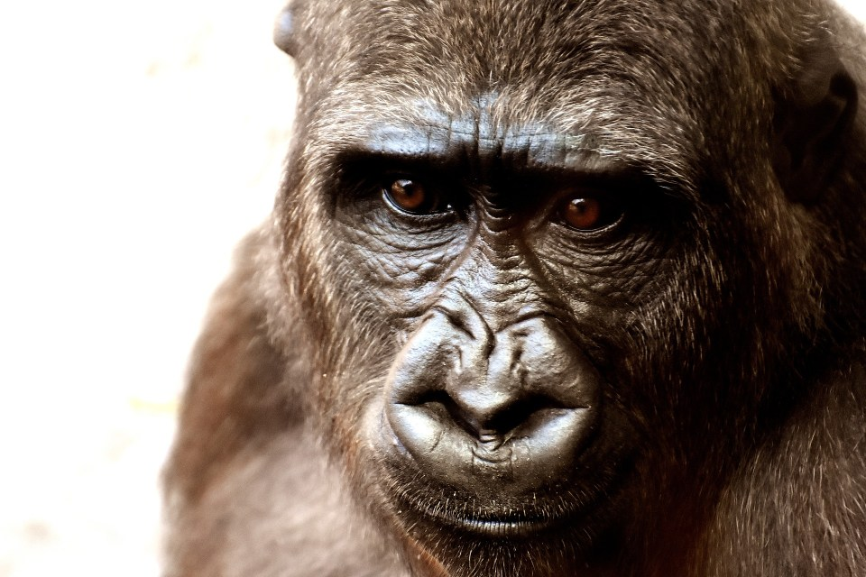 Animals in Captivity: Are Zoos Good or Bad?