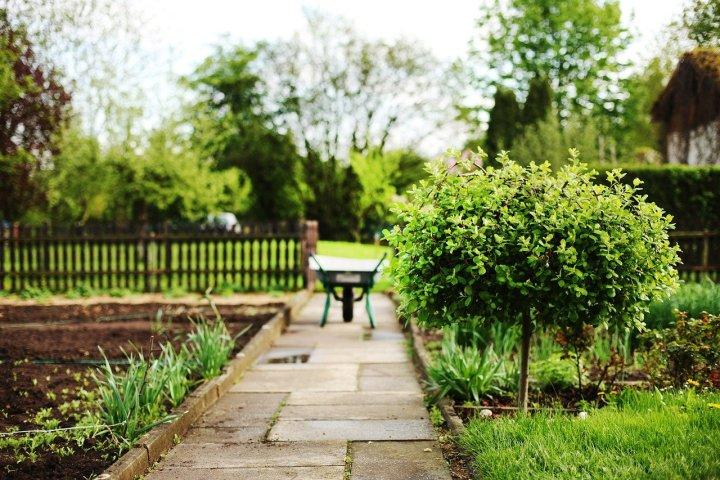 A garden with a stone path; a wheelbarrow in the background.