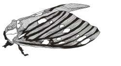 Moth - Pen & Ink