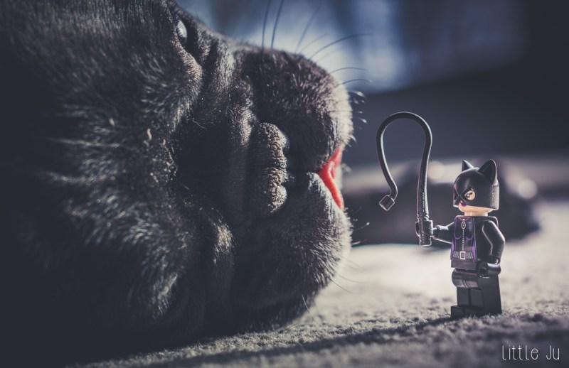 Catwoman et la Bête Noire
