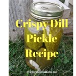 Crispy dill pickle recipe with a bottle of dill pickles sitting on a lawn