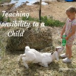 Teaching a child responsibility, little girl feeding a baby goat a bottle