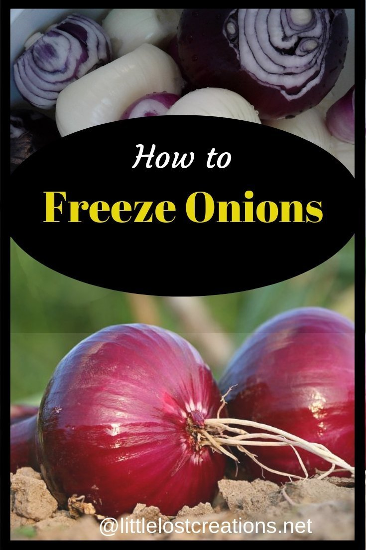 Onions yellow and purple peeled. How to freeze onions. two red onions laying in the soil.