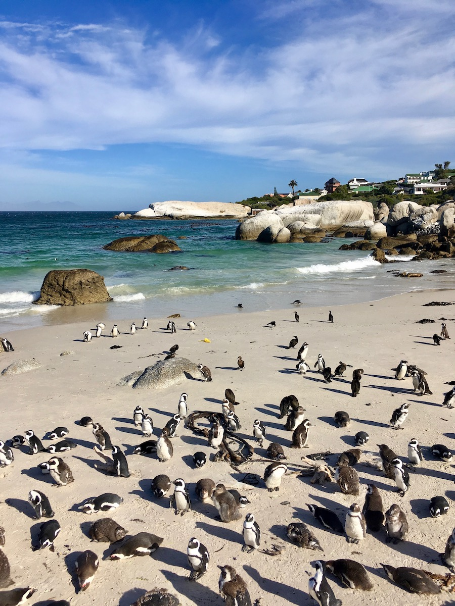 African Penguins at wheelchair-accessible Boulders Beach