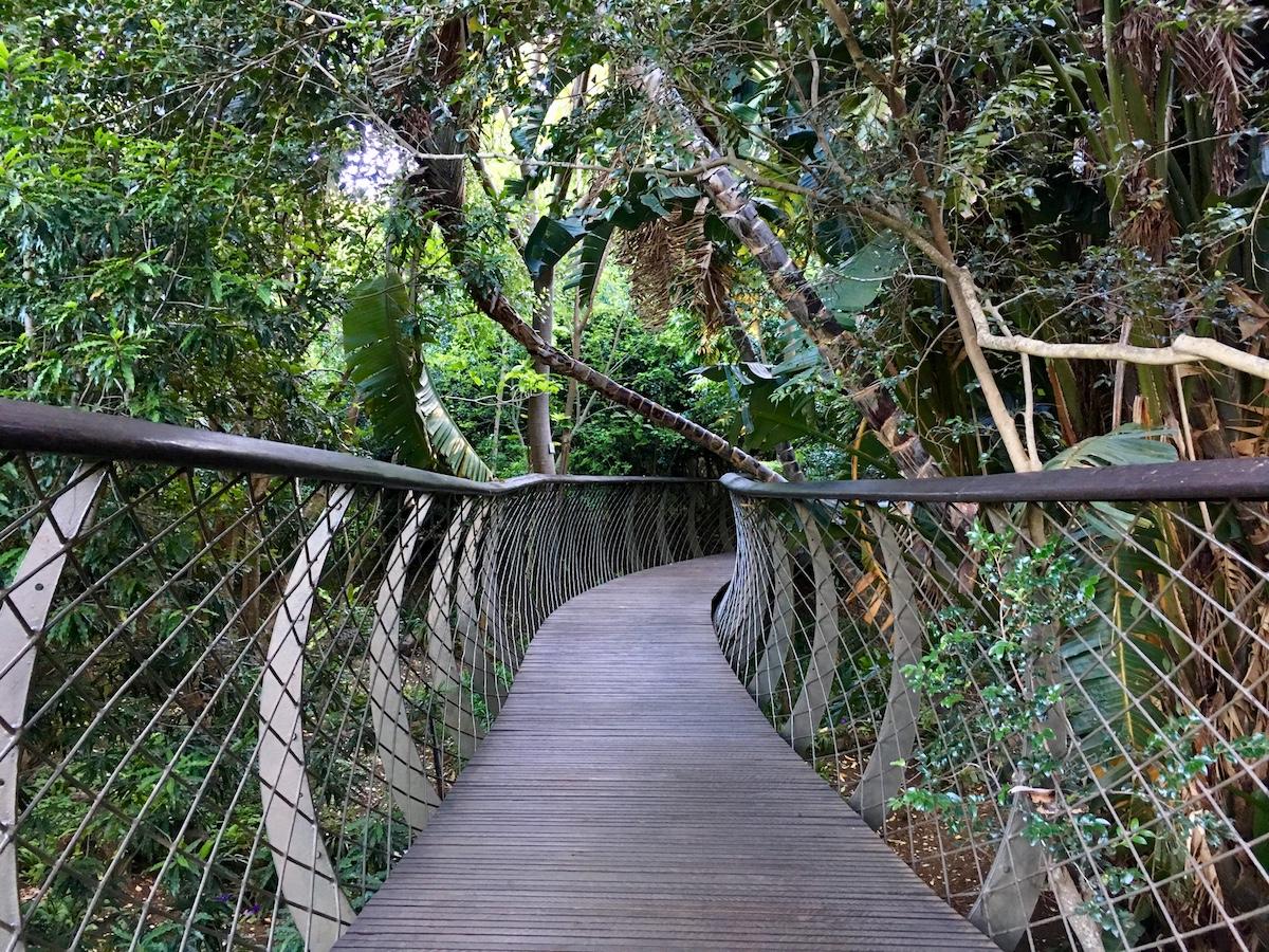Centenary Tree Canopy Walkway at Kirstenbosch National Botanical Garden