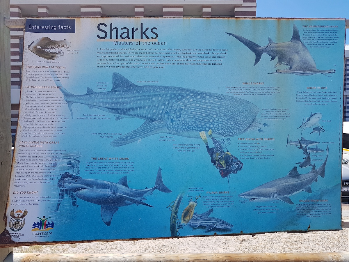 Information on Sharks at Muizenberg Beach