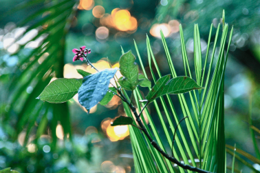 Nature Photography by Stephanie Sadler