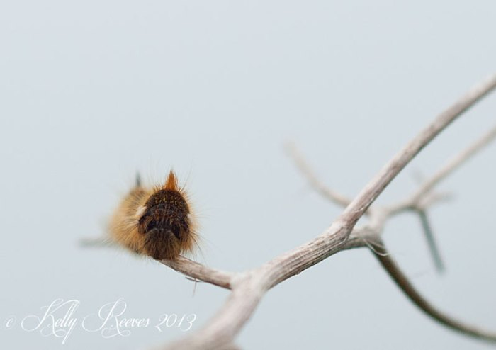 Shows fuzzy caterpillar