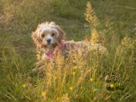 Rosie-sunset-1