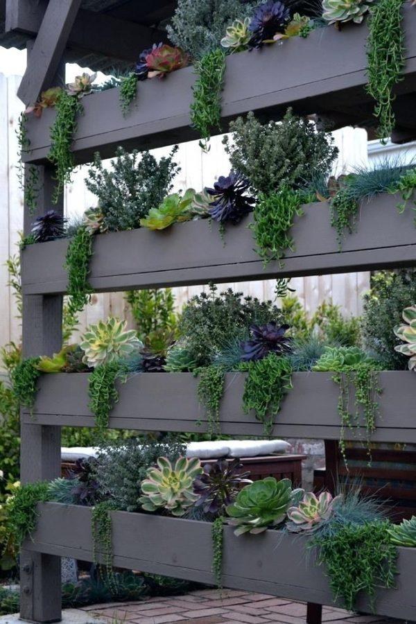 vertical succulent wall