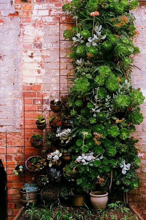 succulent wall decor