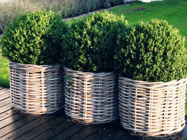 large wicker planters