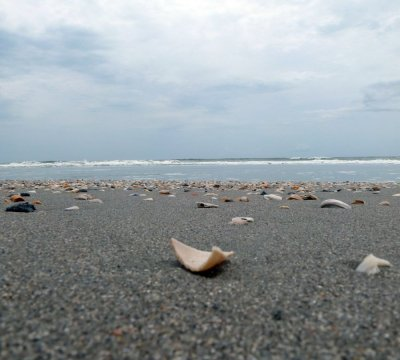 The Myrtle Beach Shorline with Seashells