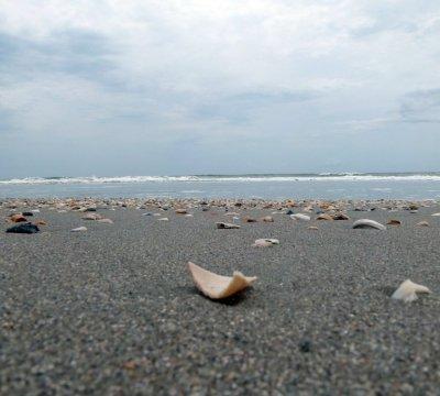 The Myrtle Beach Shorline with Seashells
