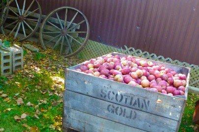 Wooden Apple Bin