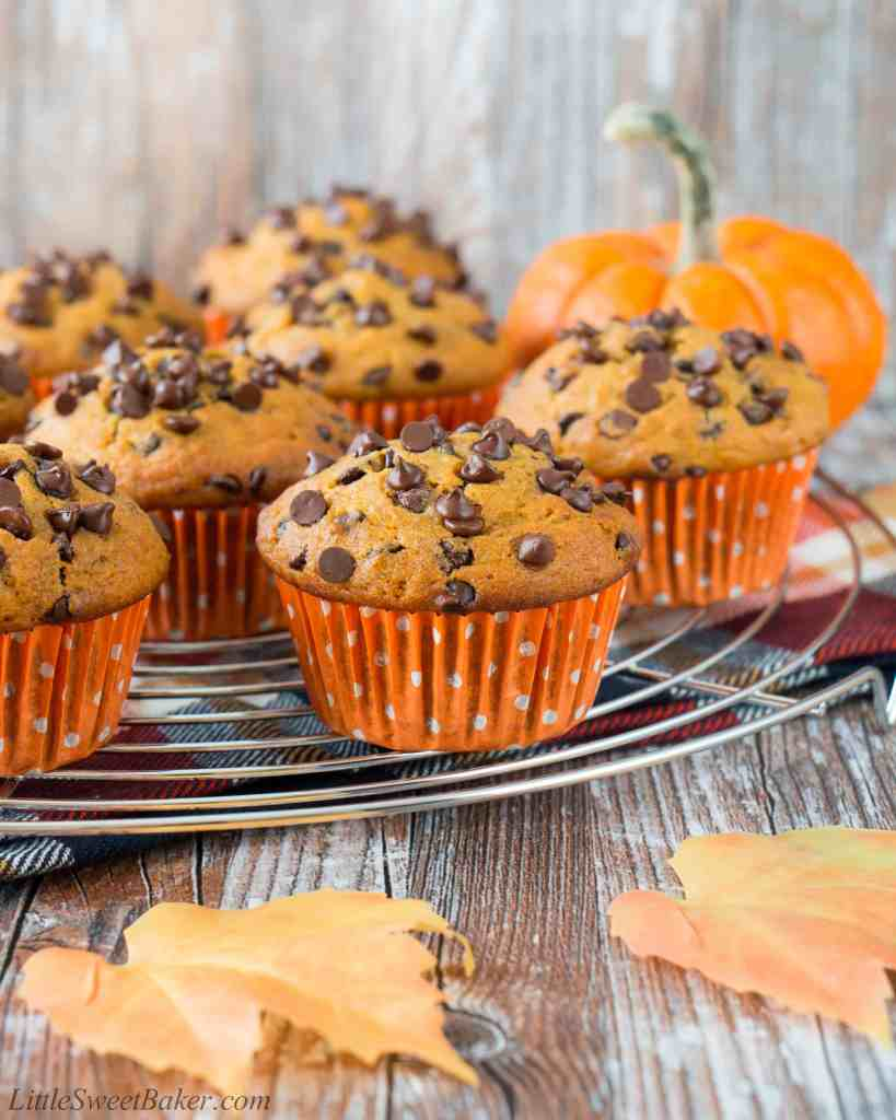 A soft and fluffy pumpkin muffin loaded with chocolate chips. It's a pumpkin and chocolate lovers dream!