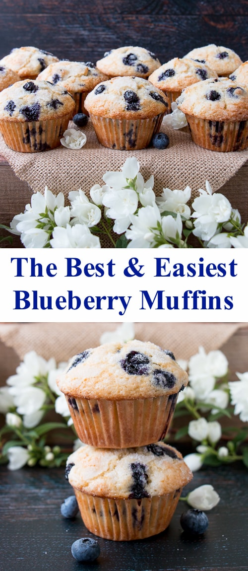 These sugar-crusted muffins are bursting with blueberries. They are incredibly soft and moist on the inside with a crispy-golden exterior. #blueberrymuffins #bestblueberrymuffins #easyblueberrymuffins