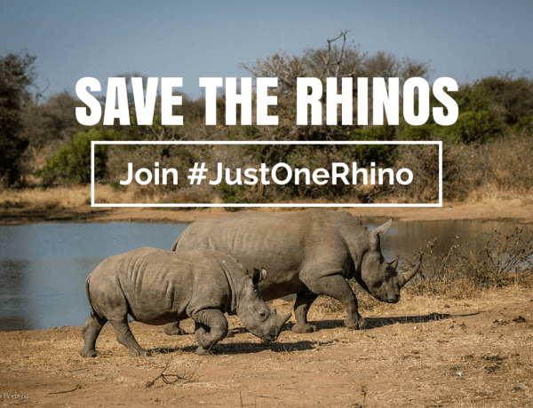 Save the Rhinos - Just One Rhino