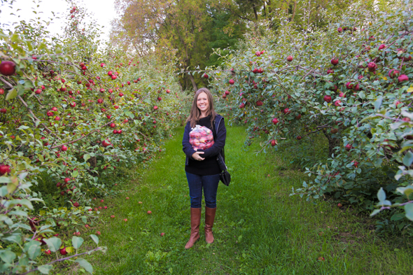 Apple Picking In Minnesota - Wander the Map
