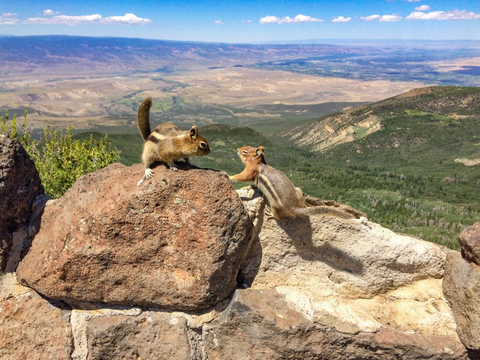 Chipmunks at Lands End Observatory - Grand Mesa National Forest Colorado
