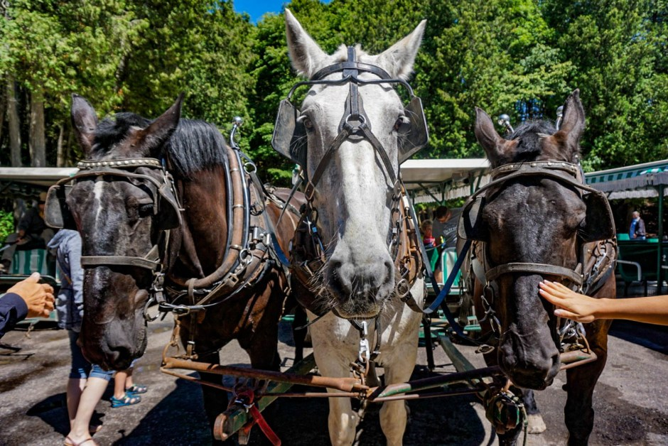 Horse Drawn Carriage Tours - Mackinac Island Travel Guide