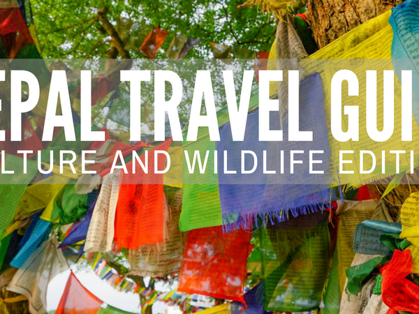 Nepal Travel Guide - Culture and Wildlife Edition
