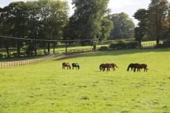 Horses grazing in Littleton