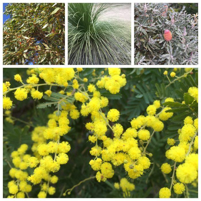 the royal botanic gardens victoria