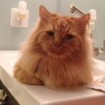 Animal Rescuers at Litwiniuk:<br>Kimberley & Pumpkin