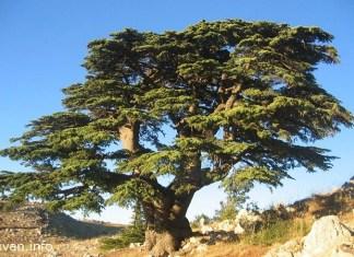 Ливан - начало всего
