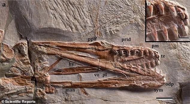 Исследователи открыли новые виды динозавров, которые пролетали над рифами и лагунами вокруг Ливана 95 миллионов лет назад.