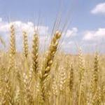世界の穀物業界で実際に起こりつつあることを把握する  = 2-1 =  第1,601号