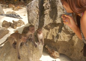 Angry Monkeys Beach, Low season in Krabi Thailand, southeast asia