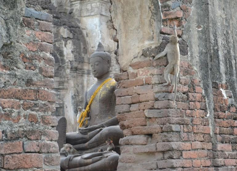 Monkeys Climbing Walls, Lopburi Monkey Town in Thailand, Southeast Asia