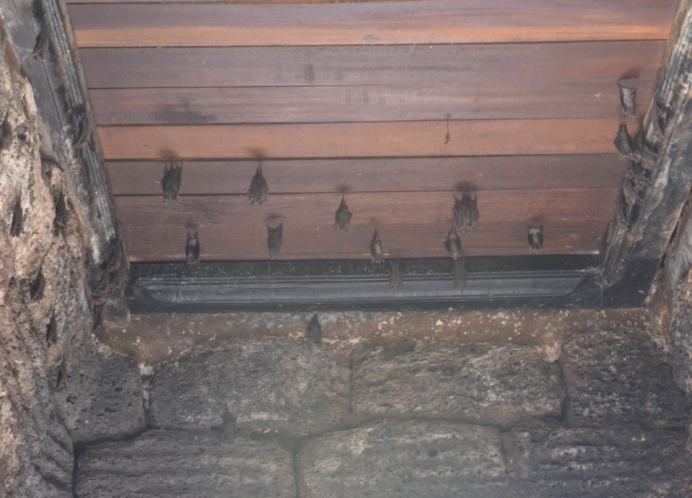 Bats in Lopburi Temple, Lopburi Monkey Town in Thailand, Southeast Asia