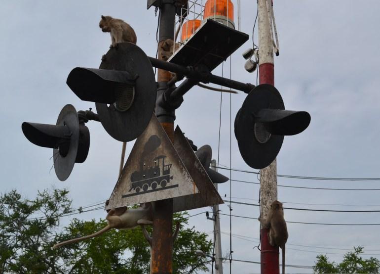 Monkeys on Pole, Lopburi Monkey Town in Thailand, Southeast Asia