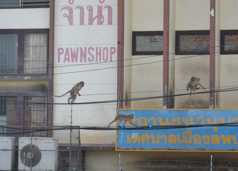 Telephone Wires, Lopburi Monkey Town in Thailand, Southeast Asia