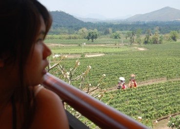 Elephants, Ripe Muscat Grapes, Hua Hin Hills Vineyard Tour, Thailand, Southeast Asia