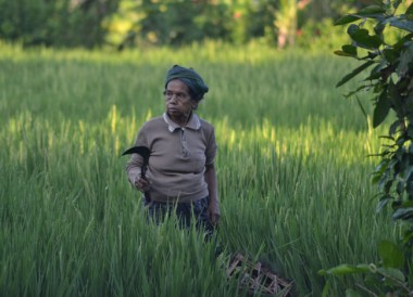 Bliss Spa Rice Field, Escape Tourism in Ubud Cultural Capital of Bali