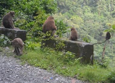 Gorumara National Park, Taxi to Gangtok from Bagdogra, NJP, Road to Sikkim