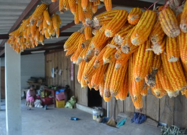 House Hanging Sweet Corn, Top 10 Chiang Rai Attractions, Northern Thailand