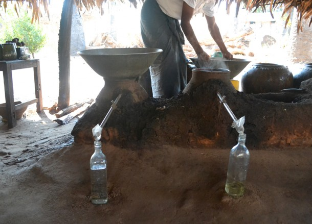 Distillation Cooling Toddy, Making Palm Wine in Burma, Potent Acohol from Palm Trees
