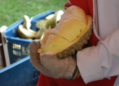Durian at Local Market, Isaan Tours and Phanom Rung
