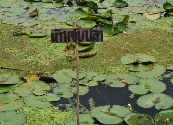 No Fishing, Lotus Ponds, Bangkok to Koh Kret Island, Thailand
