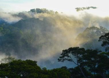 Canopy Views of Ulu Temburong Brunei, Borneo Rainforests