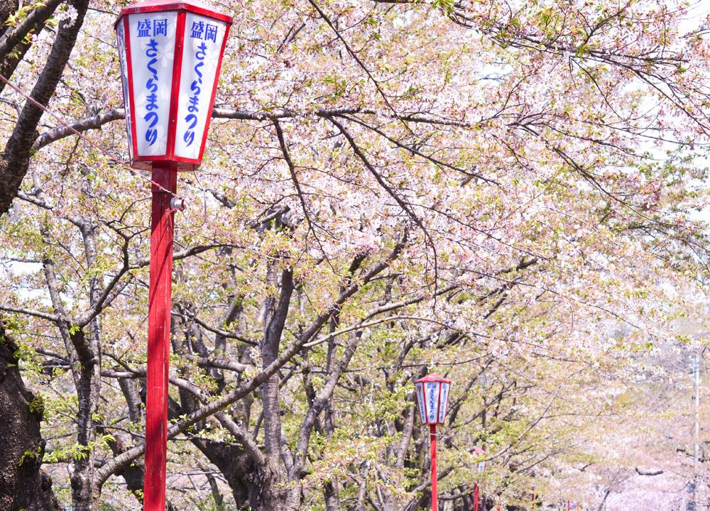 Cheery Blossoms, 2 Week JR Pass, Japan Train Travel