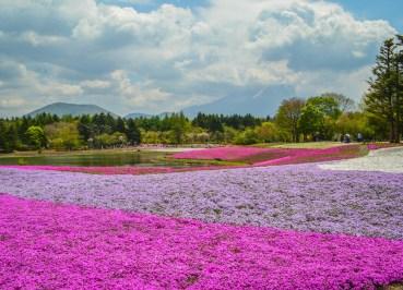 Pink Moss Festival, 2 Week JR Pass, Japan Train Travel