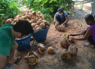 Pile of Nuts, How to Open, Prepare and Eat Coconuts
