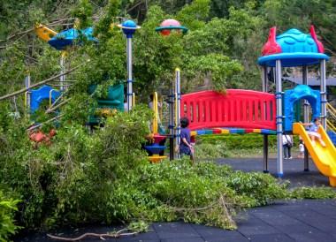 Fallen Trees in Park, Tourist in a Typhoon in Taipei, Taiwan