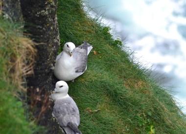 Observation Deck, Top Best Tourist Attractions in Northern Ireland
